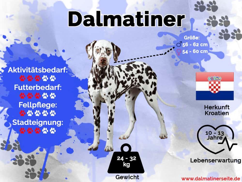 Dalmatiner Infografik