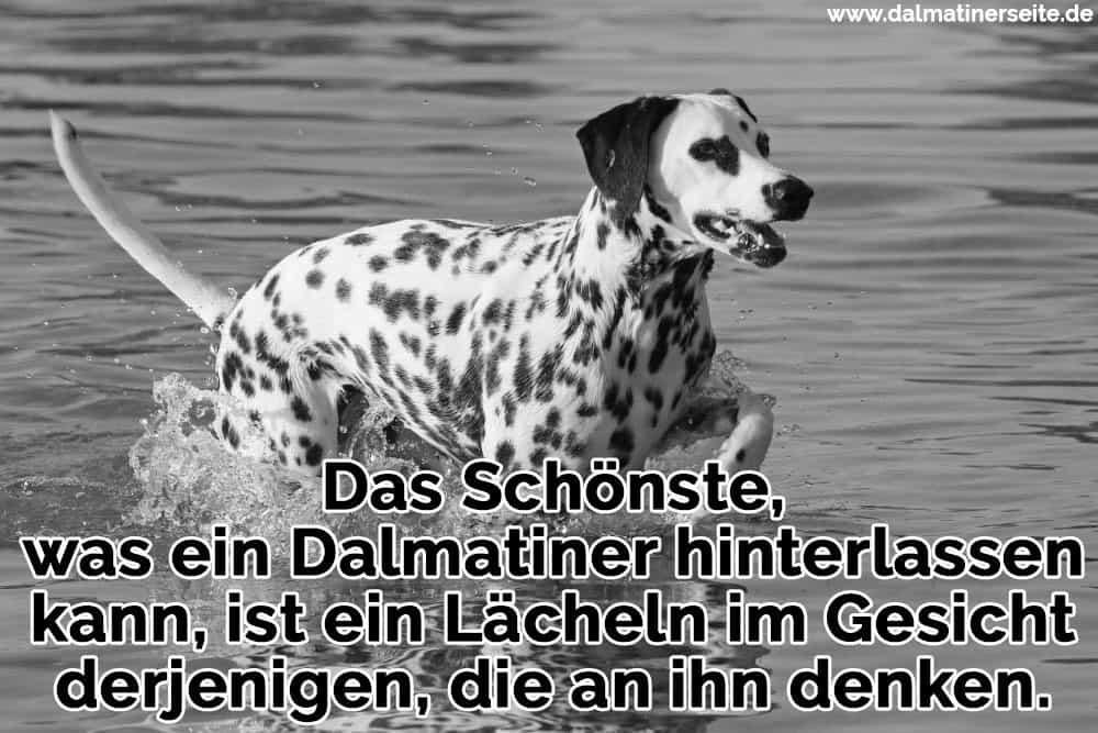 Ein Dalmatiner im Meer