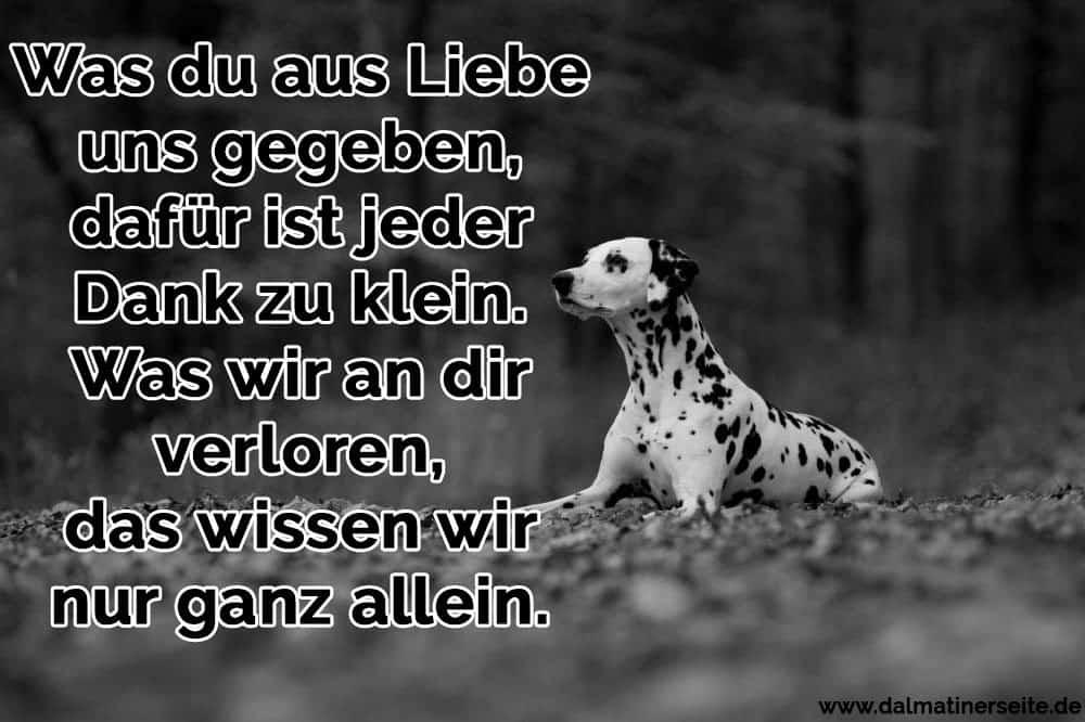 Ein Dalmatiner liegt im Wald