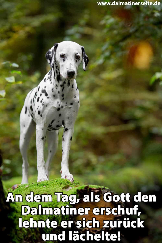 Ein Dalmatiner im Wald