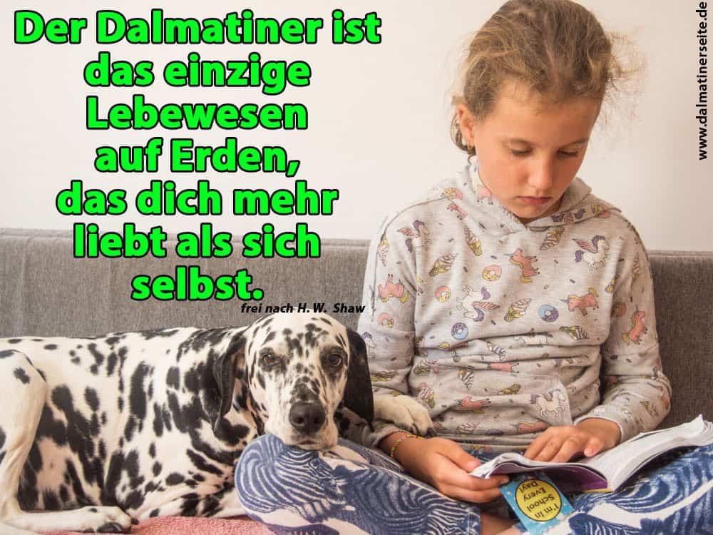 Ein Mädchen liest ein Buch für ihren Dalmatiner