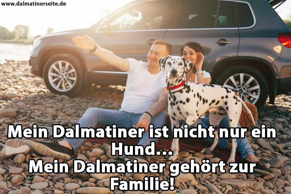 Eine Familie spielt mit ihrem Dalmatiner
