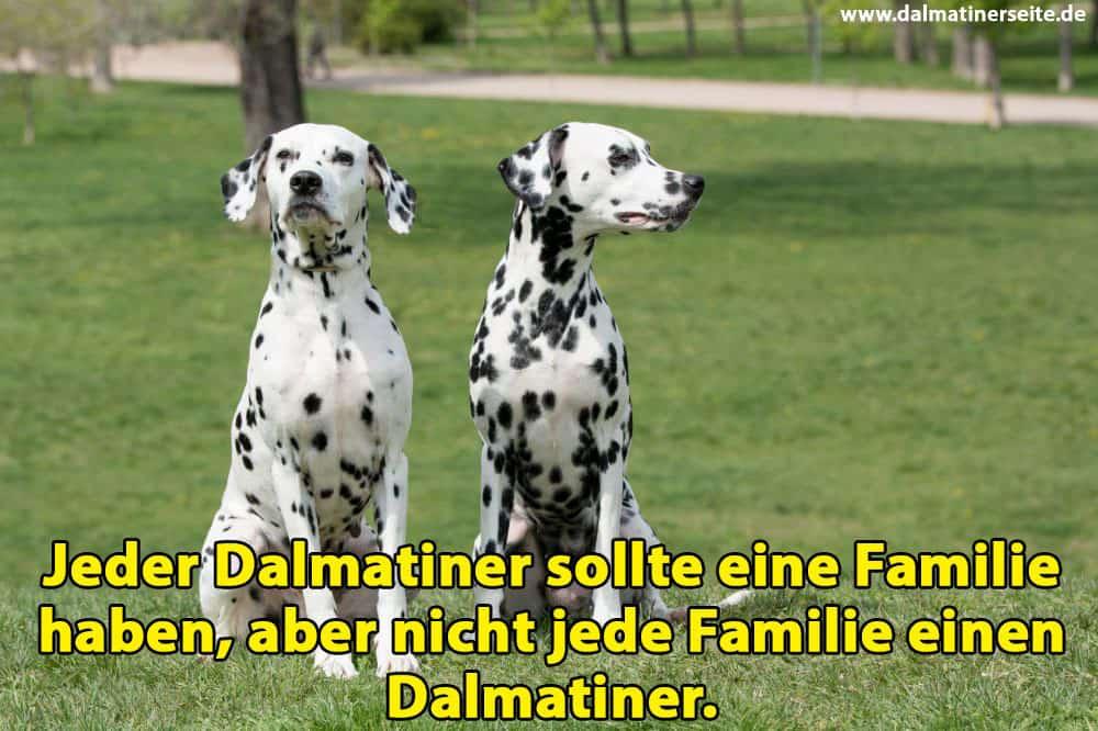 Zwei Dalmatiner sitzen auf Gras
