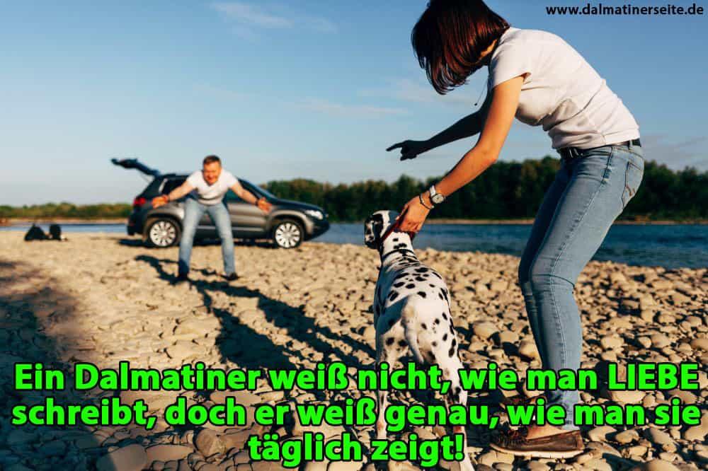 Ein Dalmatiner läuft, um seinen Besitzer zu umarmen
