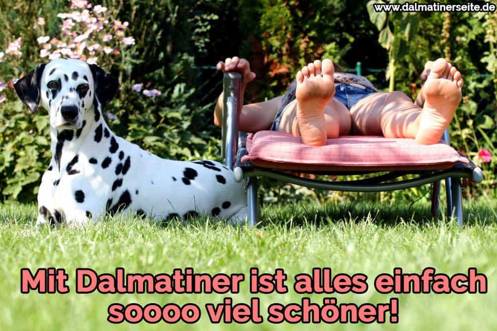 Ein Dalmatiner Sonnenbaden mit seinem Besitzer