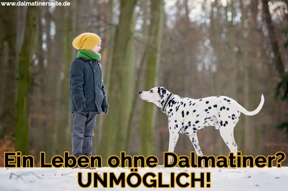 Ein Dalmatiner, der mit einem Jungen im Schnee spaziert