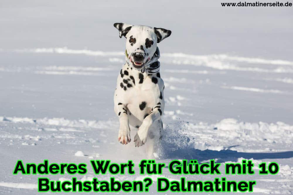 Ein Dalmatiner läuft im Schnee