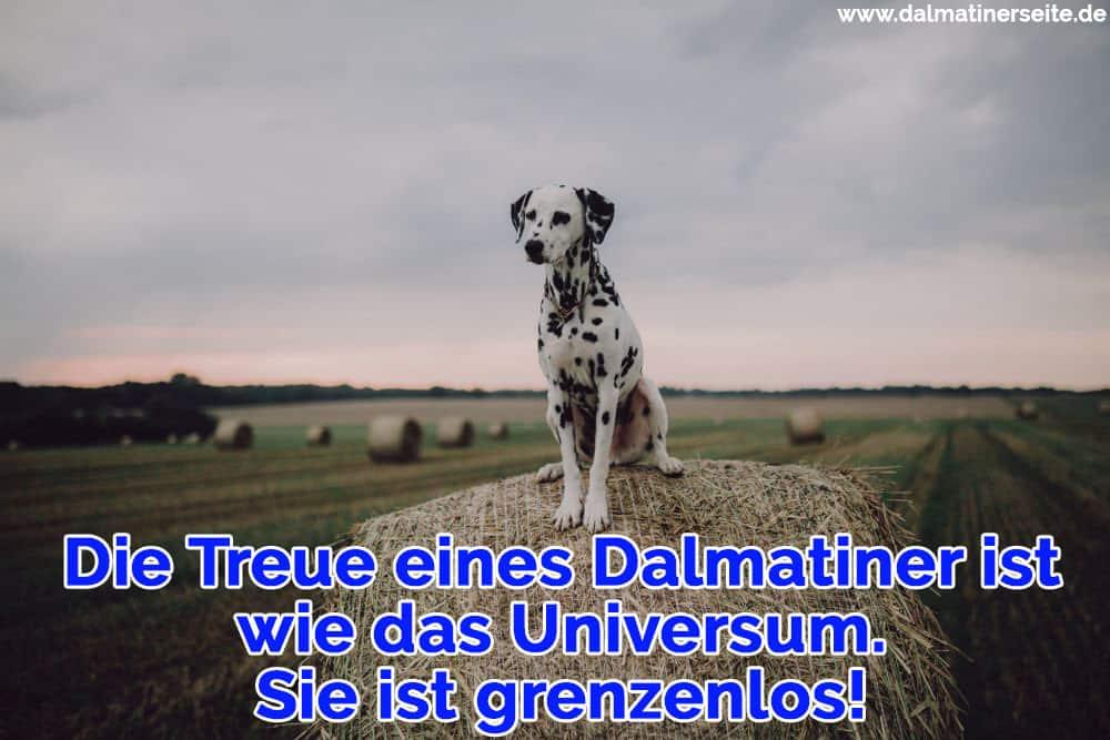Ein Dalmatiner sitzt auf dem Stein