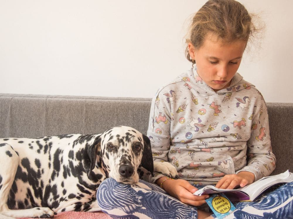 Familienanschluss Dalmatiner