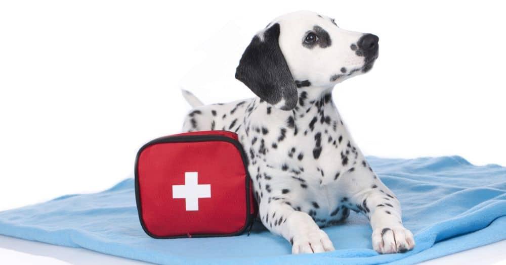 Erste Hilfe Tasche für den Dalmatiner