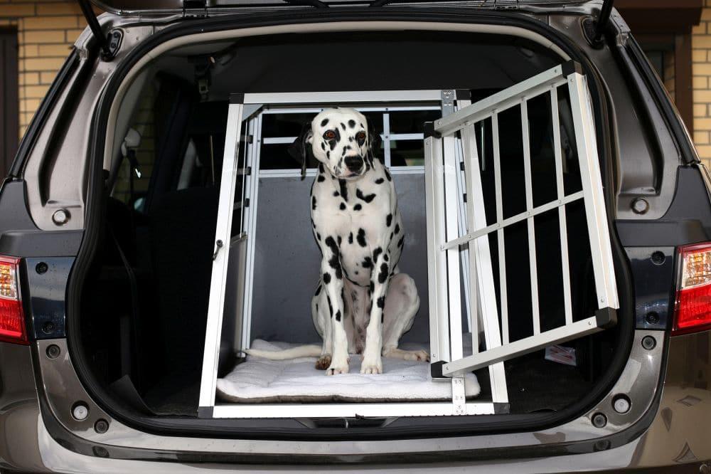 Dalmatiner in Hundebox im Kofferraum