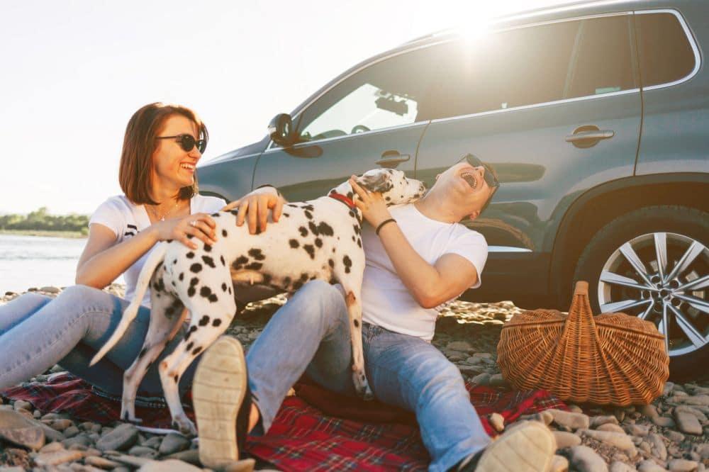 Mit dem Dalmatiner in den Urlaub fahren