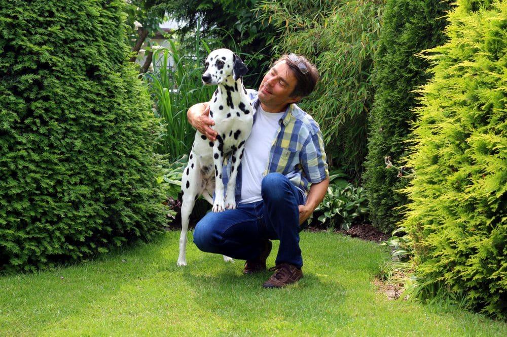 Einen Dalmatiner zu kaufen ist eine Bereicherung Ihres Lebens. Sie werden Ihren Hund lieben!