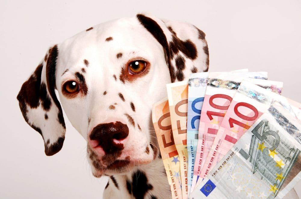 Was kostet ein Dalmatiner?