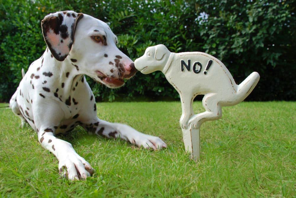 Kot auf dem Rasen verboten. Dalmatiner mit Schild