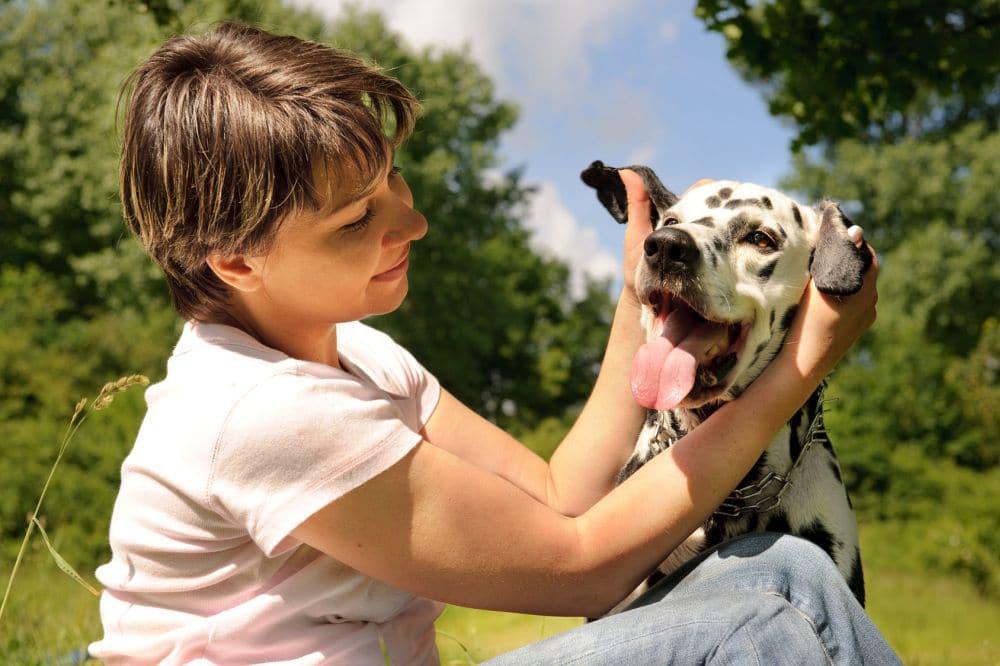 Dalmatiner Ohren Pflege