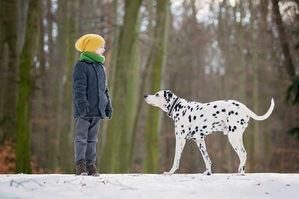 Pfotenpflege Streusalz Winter