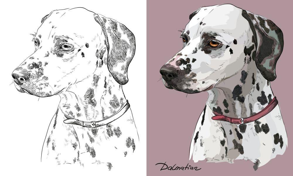 Dalmatiner im Portrait
