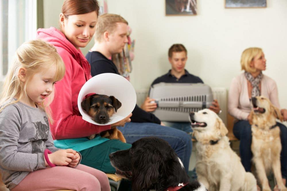 Wann muss ich mit dem Dalmatinre zum Tierarzt?;