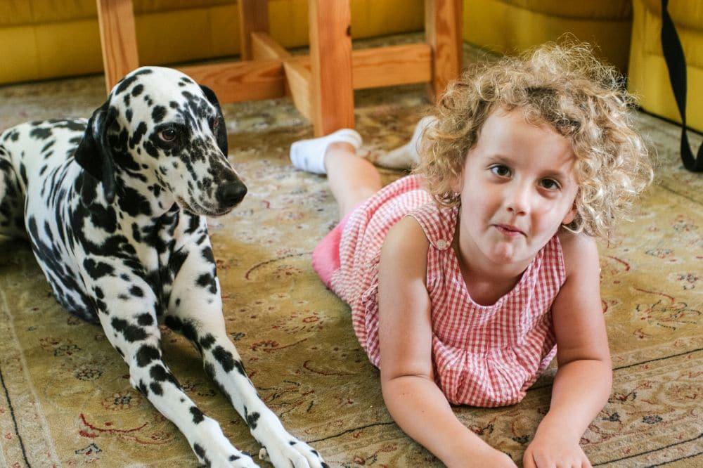 Dalmatiner und Kind