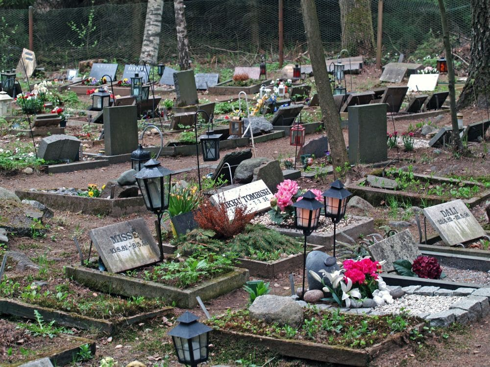 Den Dalmatiner auf dem Tierfriedhof begraben.