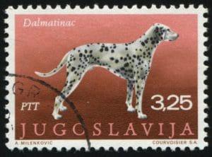 Dalmatiner Briefmarke