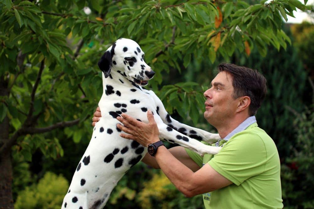 Dalmatiner und Mann liegen sich in den Armen, Garten
