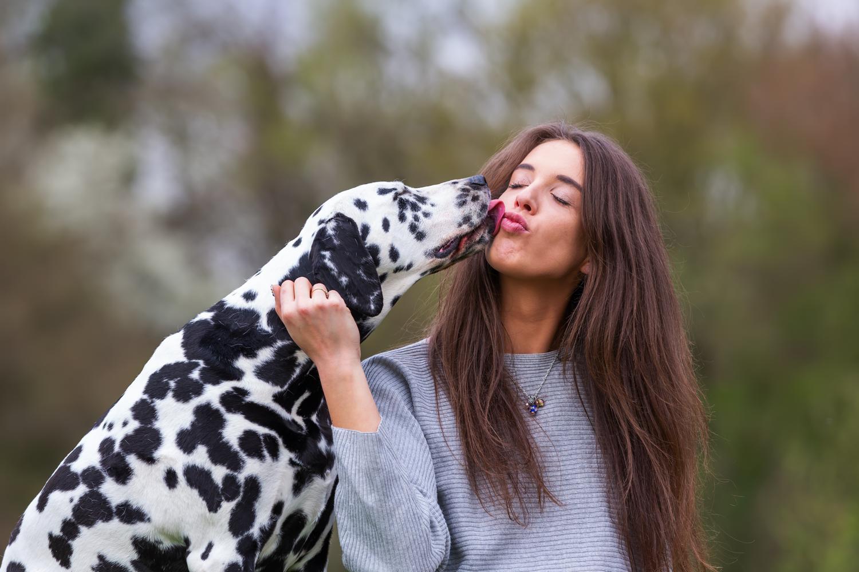 Vorteile Dalmatiner BARFen